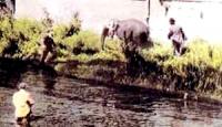 An Land erwarten den so genannten »Elefanten« bereits drei Polizeibeamte